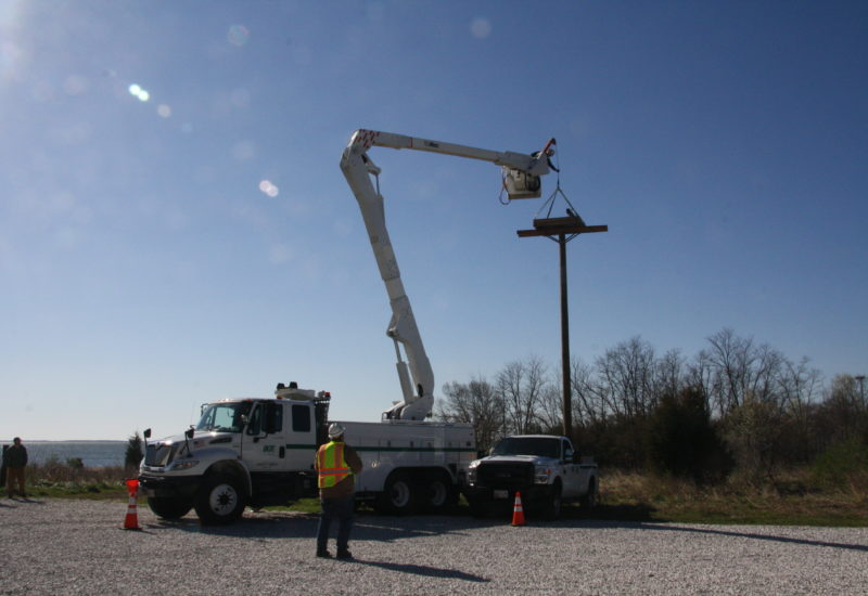 BGE raised a nest platform at the Chesapeake Bay Foundation