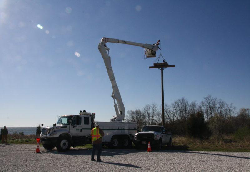 BGE raised a nest platform at the Chesapeake Bay Foundation