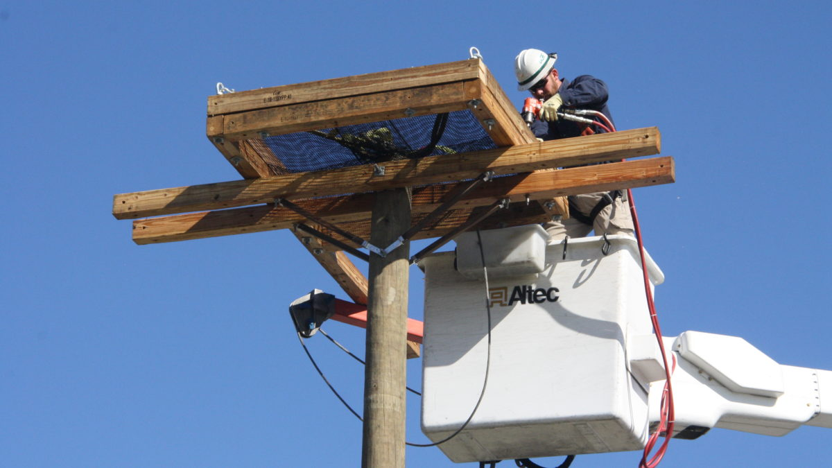 A service operator puts the finishing touches on a new nest platform for the Chesapeake Bay Foundation