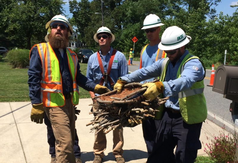 BGE linemen with osprey nest