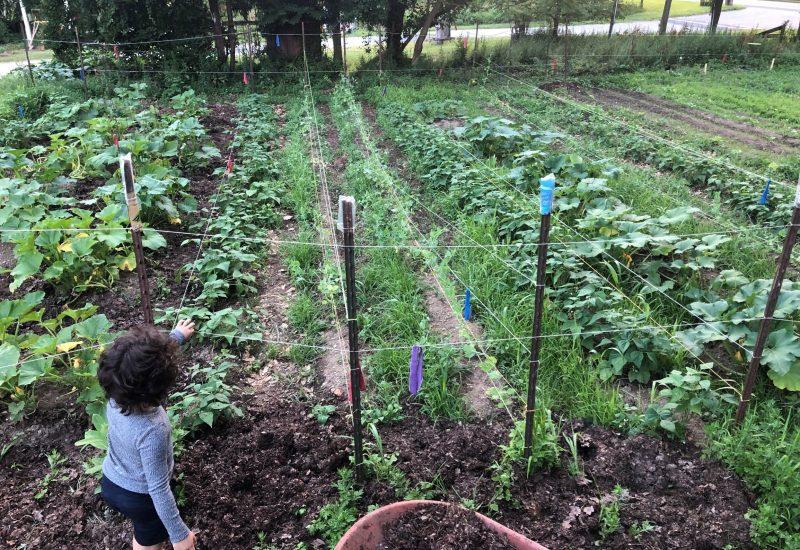 Community Ecology Center garden