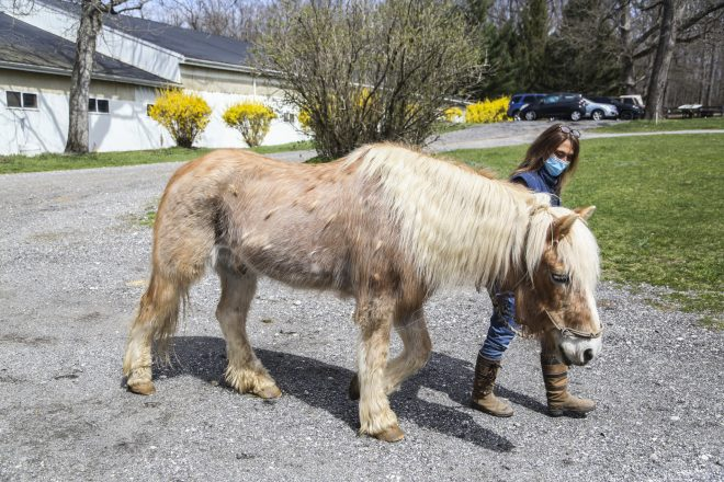 Timberbrook Equine Therapy Farm is Expanding its Services Thanks to new Exelon Grant