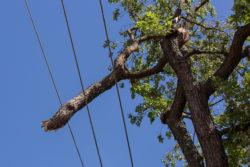 Tree Limb on Wire